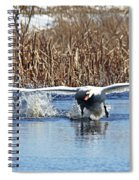 Mute Swan Chasing Canada Goose Spiral Notebook