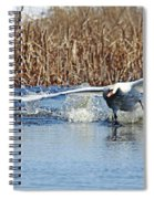 Mute Swan Chasing Canada Goose I Spiral Notebook