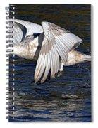 Mute Swan Take Off Spiral Notebook