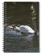 Mute Swan With Three Cygnets Following Spiral Notebook