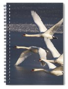 Mute Swans In Flight Spiral Notebook