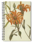 Mutisia Decurrens Spiral Notebook