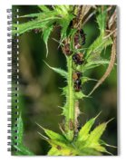 Mutualism - Ants And Treehoppers Spiral Notebook