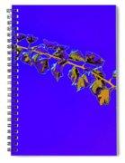 My Bougainvillea Aurea 10 Spiral Notebook