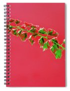 My Bougainvillea Aurea 4 Spiral Notebook