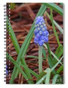 My First Bluebells Spiral Notebook