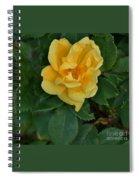 My First Yellow Rose Spiral Notebook