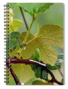 My Grapvine Spiral Notebook