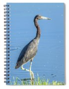 Erect Walking Tricolored Spiral Notebook