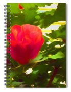 My Love Is Like  A Red Red Rose Of Sharon Spiral Notebook