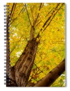 My Maple Tree Spiral Notebook