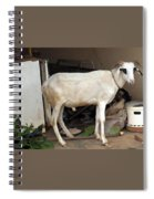 My Ram Spiral Notebook
