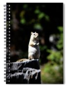 My Tree Stump Pedestal Spiral Notebook