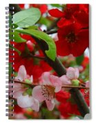 My Two Quince Worth Spiral Notebook