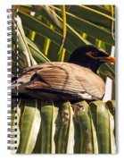 Myna In The Palms Spiral Notebook