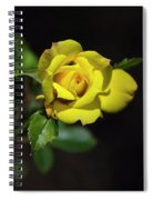 Mystic Yellow Rose Spiral Notebook