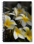 Na Lei Pua Melia - Morning Whispers Spiral Notebook