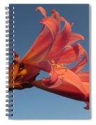 Naked Lady Spiral Notebook