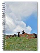 Nap Time 2 Spiral Notebook