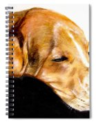 Napping Nadine Spiral Notebook