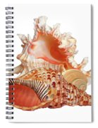 Natural Shell Collection On White Spiral Notebook