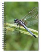 Nature Macro - Blue Dragonfly Spiral Notebook