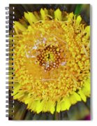 Natures Eye Spiral Notebook