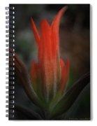 Nature's Fire Spiral Notebook