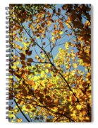 Natures Gold Spiral Notebook