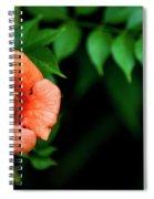 Natures Trumpet Spiral Notebook