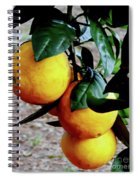 Naval Oranges On The Tree Spiral Notebook