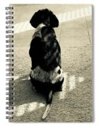 Neaco Waitng For A Cookie Spiral Notebook