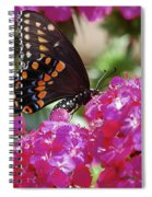 Nectar Of Pink Passion Spiral Notebook