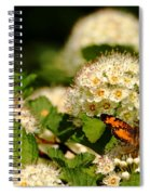 Nectaring Pearl Crescents Spiral Notebook
