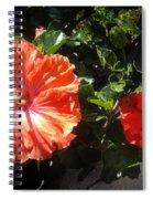 Neon-red Hibiscus Flowers 6-17 Spiral Notebook