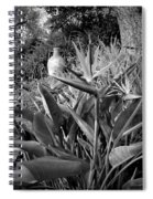Nepenthe Bird Of Paradise B And W Spiral Notebook