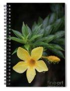 Nerium Oleander In The Rain Spiral Notebook