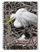 Nesting Great Egret With Chick Spiral Notebook