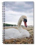 Nesting Mute Swan At Abbotsbury Spiral Notebook