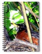 Nesting Robin Spiral Notebook