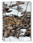 Nesting Woodcock She Survived Her Eggs From The Snow Spiral Notebook