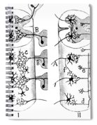 Neuroglia Cells Illustrated By Cajal Spiral Notebook