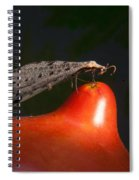 Neuroptera Posing Spiral Notebook