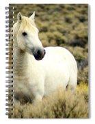 Nevada Wild Horses 3 Spiral Notebook