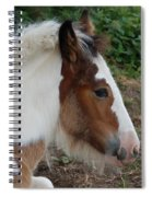 New Arrival Spiral Notebook