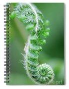 New Bracken Fern Spiral Notebook