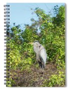 New Nest For Great Blue Heron Spiral Notebook