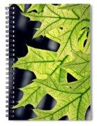 New Oak Leaves    Spiral Notebook
