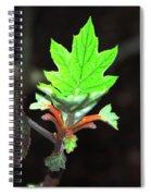 New Spring Leaf Spiral Notebook