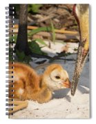 New Sunny Day Spiral Notebook